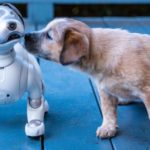 Robots promoting animal welfare