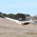 Introducing a New Birdbot: PigeonBot