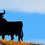 Bitcoin Price Rallies Higher but Must Hit $8K to Start a Bull Market - Cointelegraph
