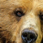 By Definition, Bitcoin Is Still in a Bear Market: Why This Will Soon Change - NewsBTC